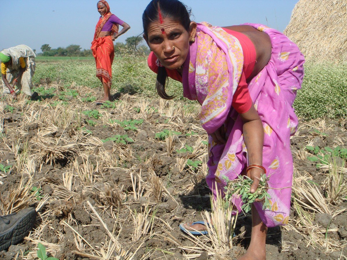 woman working in field